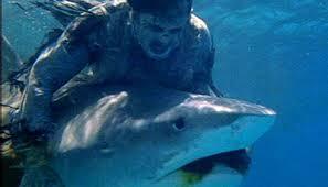 Shark V. Zombie Redux